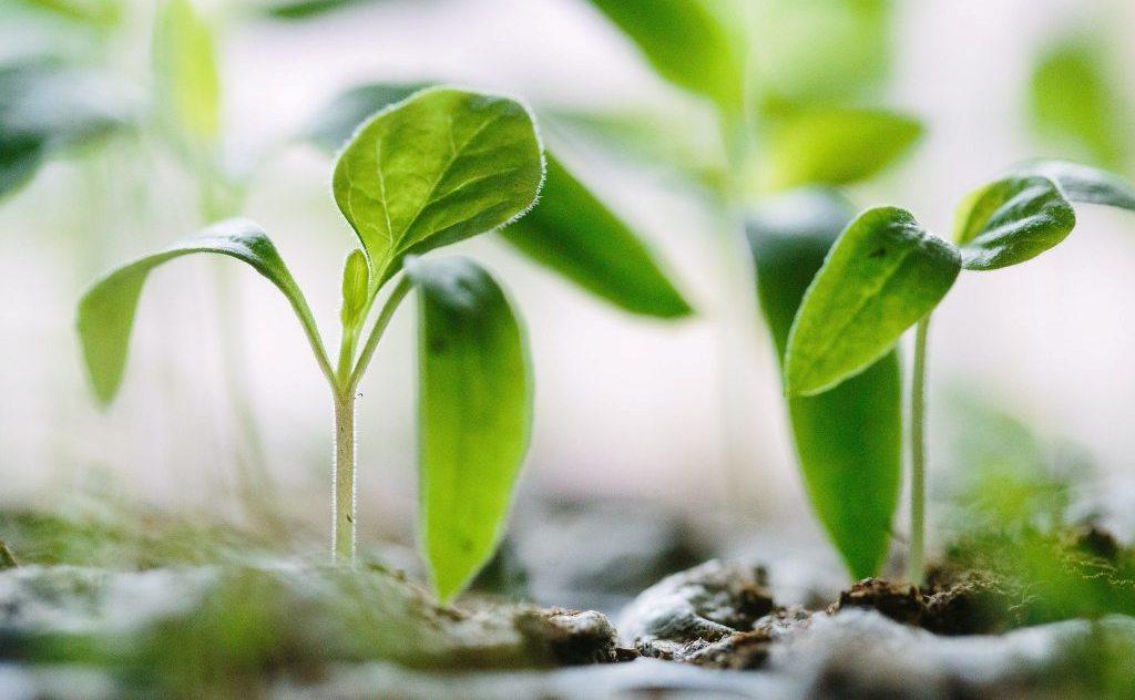 Permaculture et entrepreneuriat : s'inspirer de la nature pour conceptualiser ses projets
